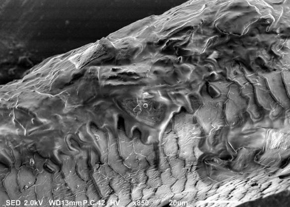 斑马鱼幼虫恐怖宛如鬼片!显微镜下事物的神奇照片