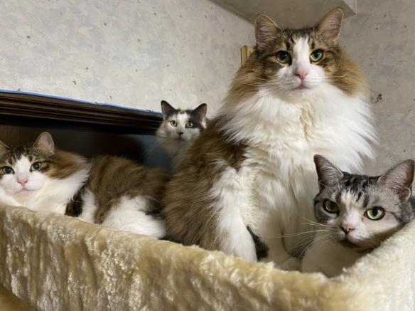 收集3年的精华!铲屎官收集猫毛的成果超级壮观