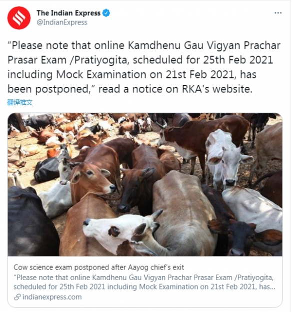 牛粪治新冠 杀牛会地震!印度牛学考试50万人报名