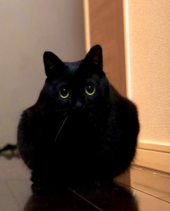 """你竟然能拍到这种猫?网友""""猫之日""""分享奇迹瞬间"""