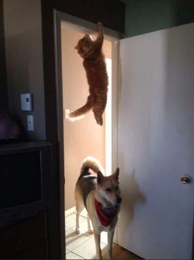 小心我用猫猫拳教你做人!喵星人10大搞笑POSE欣赏