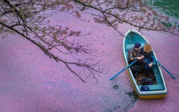 """又是一年樱花季!一起来""""云赏樱""""领略绝美樱花盛景"""