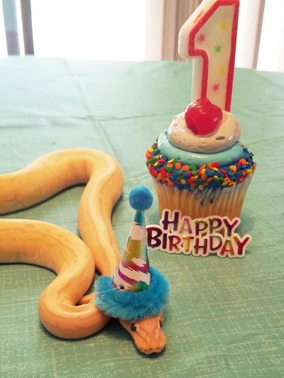 网友分享的20张戴帽子的宠物蛇 看起来竟有点可爱!