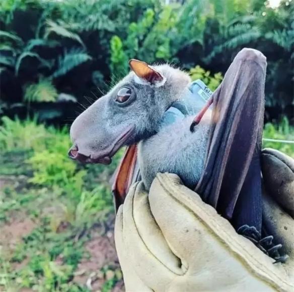 猫头鹰竟有一双修长美腿!细数28张活久见的动物图片
