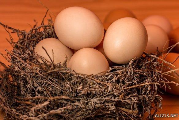 鸡蛋意念返熟为生论文疯传 已孵化40枚真的不是魔法?