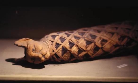 古埃及人将猫制成木乃伊:建造世界上第一个宠物墓地!