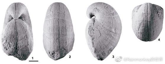 贵阳机场男卫生间惊现4亿年前化石:或成网红打卡地?