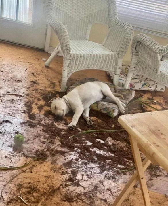 大狗居然还能分裂出小狗吗?让人爆笑的沙雕汪星人