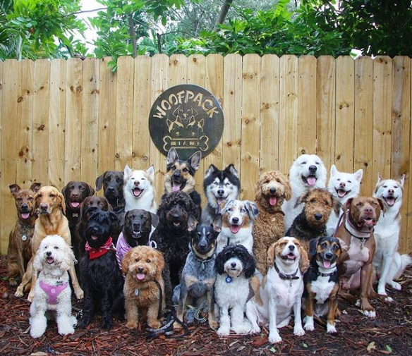 主人可以放风了!欢乐狗狗幼儿园:排排站等拍照好乖!