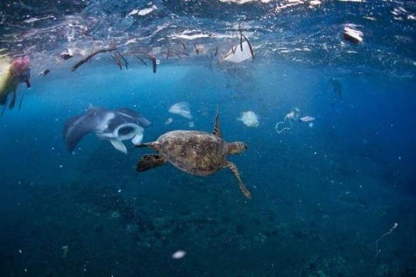200余斤巨型海龟不治身亡:解剖后,发现惊人一幕!
