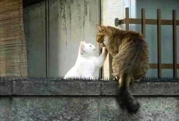 考驾照怎么这么难!国外网友分享超搞笑沙雕动物照