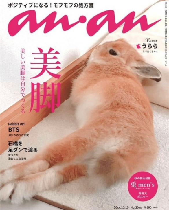 兔女郎极致美腿诱惑 囧图 当你看太多片却无处实践时