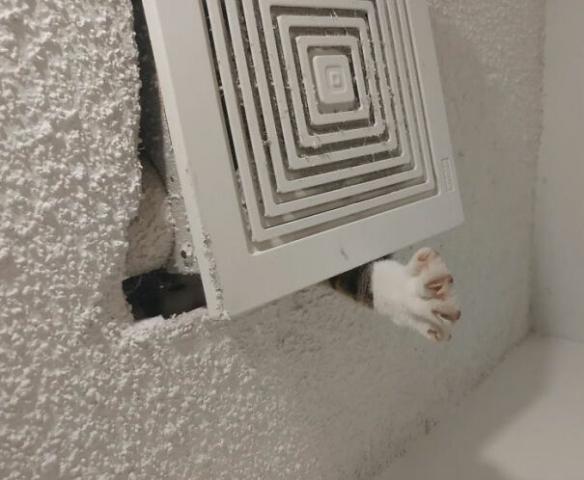 铲屎的快看 是薯片!国外网友分享天花板猫沙雕照